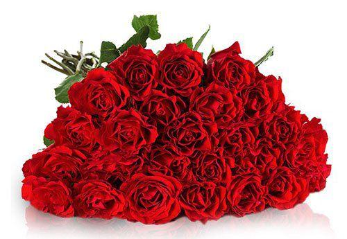 Ziel erreicht! Miflora Rosen Rallye mit 30 roten Rosen für 19,90€