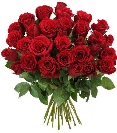 39 rote Rosen + 2 Gratisartikel für 24,98€ inkl. Versand