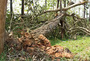 Herbststurm – welche Schäden zahlt welche Versicherung?