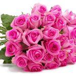 "44 Rosen ""PinkDiamonds"" für 24,98€"