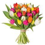 41 bunte Tulpen mit 40cm Länge für 22,98€