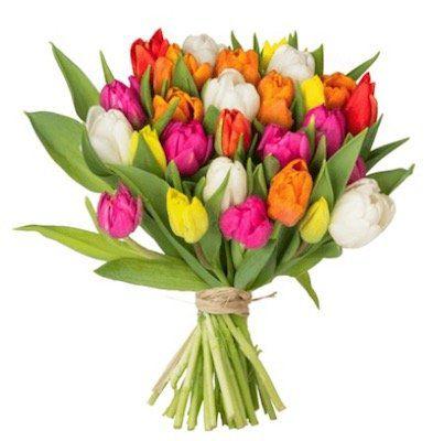 41 bunte Tulpen mit 40cm Länge für 22,98€ oder 33 Tulpen für 19,98€