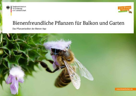 Bienenfreundliche Pflanzen für Balkon und Garten (Print/PDF) kostenlos