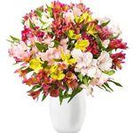 44 Inkalilien (bis zu 300 Blüten) für 24,98€