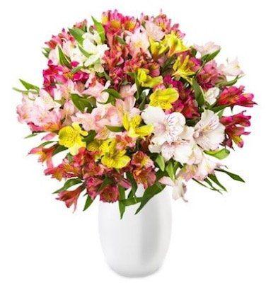 44 Inkalilien (bis zu 300 Blüten) für 22,98€