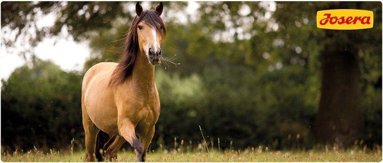 Neue Gratis Artikel: Hundefutter, Sonnenmilch & Pferdefutter