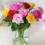 Last Minute Valentinsgeschenk? 12 bunte Rosen nur 8,45€inkl. Versand