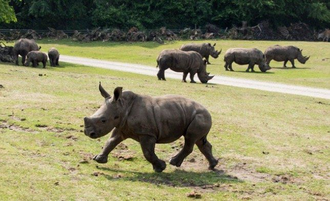 Serengeti Park Tageskarte für nur 26,90€