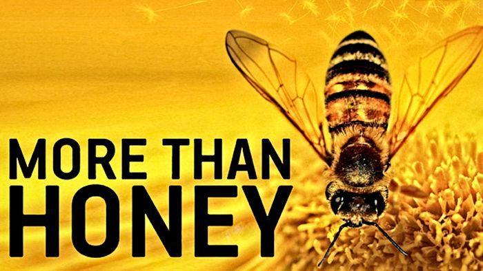 More than Honey   bitterer Honig (Doku) kostenlos