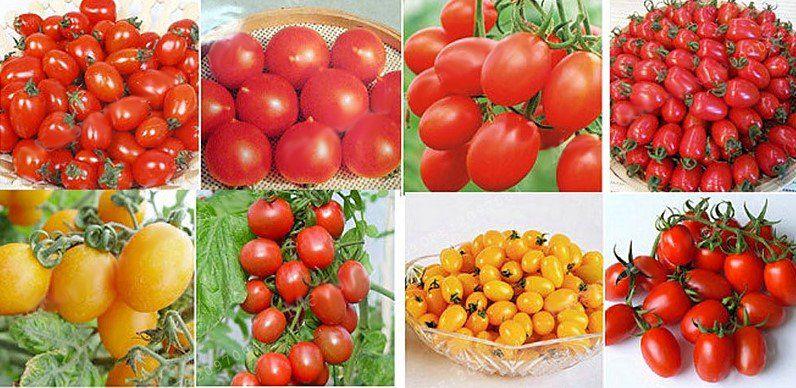 200 Tomatensamen für den Balkon für Rote, Schwarze oder Gelbe Tomaten für je 1,62€