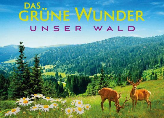 Das grüne Wunder – Unser Wald (Doku) kostenlos in der NDR Mediathek