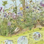 Diverse Naturposter für Kinder kostenlos anfordern