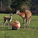 Serengeti Park: Ei dabei – Eintritt frei für Kinder bis 12 Jahre am Ostersonntag (statt 27€)