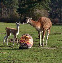 Serengeti Park: Ei dabei   Eintritt frei für Kinder bis 12 Jahre am Ostersonntag (statt 27€)