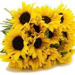 Sonnenblumen-Strauß mit 8 Blumen und max. 50cm Länge für 13,87€