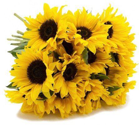 Sonnenblumen Strauß mit 8 Blumen und max. 50cm Länge für 13,87€