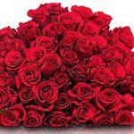 """50 rote Rosen """"ClassicRed"""" für 29,98€"""