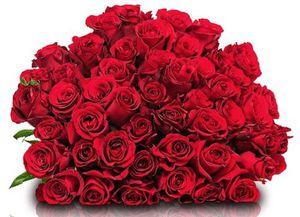 33 rote Fairtrade Rosen für 19,98€