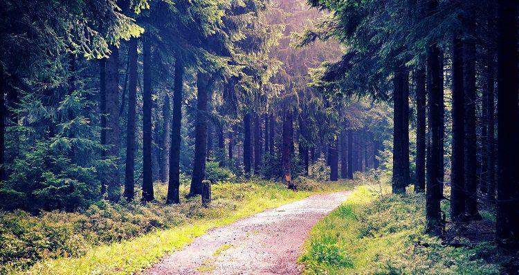 2, 3, 5 o. 7 ÜN im Thüringer Wald inkl. Halbpension & Eintritt ins Ottilienbad (bei 7 Nächten) ab 89€ p.P.