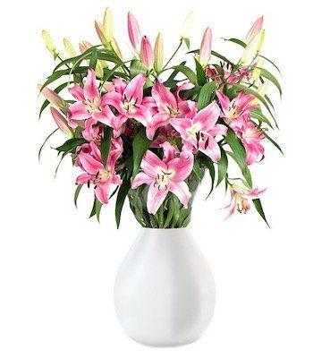 15 Lilien mit bis zu 50 Blüten für 19,98€