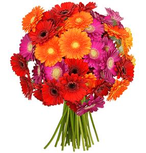 34 bunte Gerbera Blumen für 19,98€