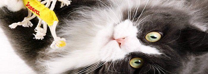 Josera: 2 Katzenfutterproben kostenlos und 5€ Gutschein