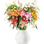 16 bunte Lilien mit bis zu 60 Blüten für 20,98€