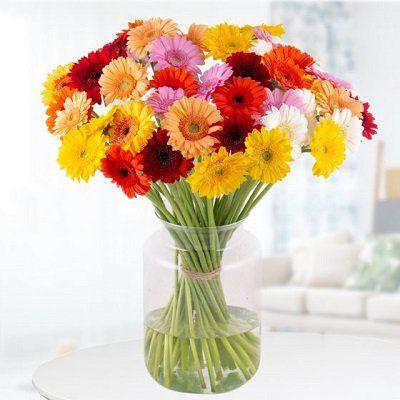 40 bunte Gerbera Blumen + Grußkarte für 22,90€