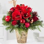 Blume2000 mit 30% Rabatt auf ausgewählte Weihnachtsblumen – z.B. Amaryllis No-Water in Weiß mit Wachs in Roségold