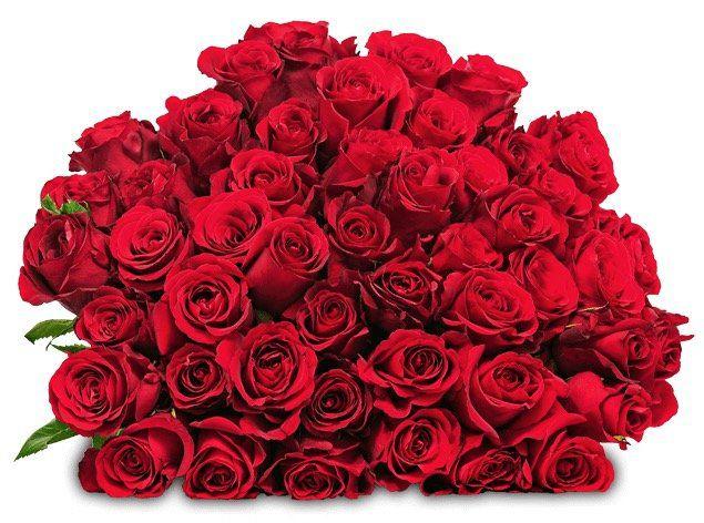 44 rote Rosen mit 50cm Länge für 24,98€
