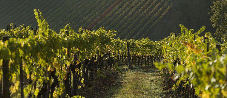 10 Tage Weinreise durch Norditalien inkl. 4 Weinproben, Führungen & mehr ab 459€ p.P.
