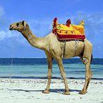 Super Last-Minute: Hin- und Rückflug von Frankfurt nach Mombasa (Kenia) inkl. 20kg Gepäck für nur 280€ p.P.