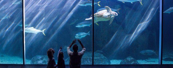 Für DKB Aktivkunden: Gratis Besuch von Unterwasserwelten