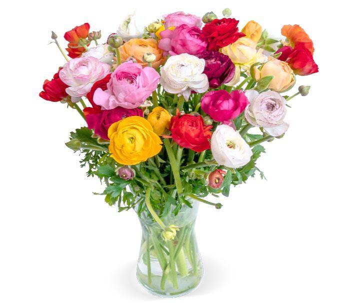 Blumenstrauß mit 40 bunten Ranunkeln für 25,98€