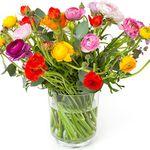Blumenstrauß mit 33 bunten italienischen Ranunkeln für 22,90€