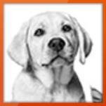 Cashback Royal Canin Tierfutter