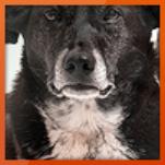 Hole dir den Cashback für Platinum-Hundefutter