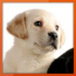 Hole dir den Cashback für Belcando Premium Hundenahrung