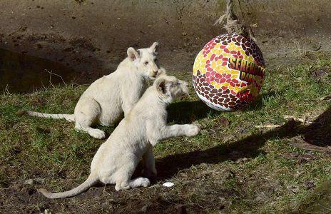 Serengeti Park: Ei dabei   Eintritt frei für Kinder bis 12 Jahre am Ostersonntag