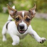 MERA Hunde  und Katzenfutter kostenlos