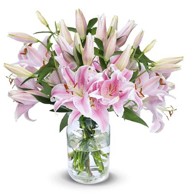 12 bunte Lilien mit bis zu 40 Blüten für 19,43€