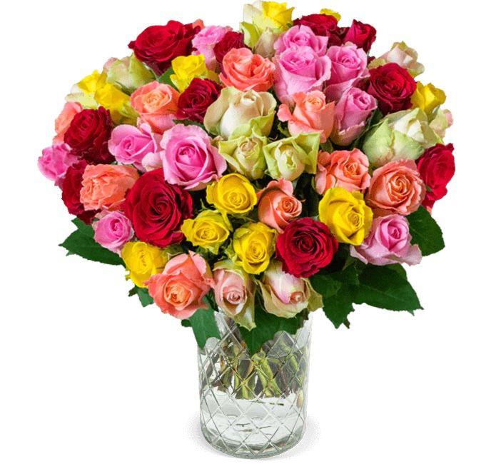 """41 bunte """"Rainbow Roses"""" mit 50cm Länge für 25,98€"""