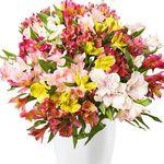 Blumeideal mit 20% auf Alles!!