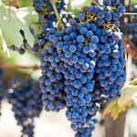 10 Tage Wein  und Ginrundreise inkl. Hotels durch Piemont, Toskana und Venetien ab 499€ p.P.