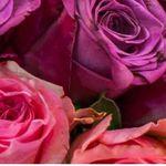 🔥 Blumeideal mit 22% extra Rabatt auf ausgewählte Rosensträusse (einige + gratis Vase)