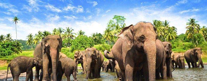 15 Tage Sri Lanka Malediven Rundreise mit uralten Tempeln und weißen Stränden ab 2.649€ p.P.