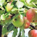 Obst selbst ernten und gratis mitnehmen z.B. in Bielefeld