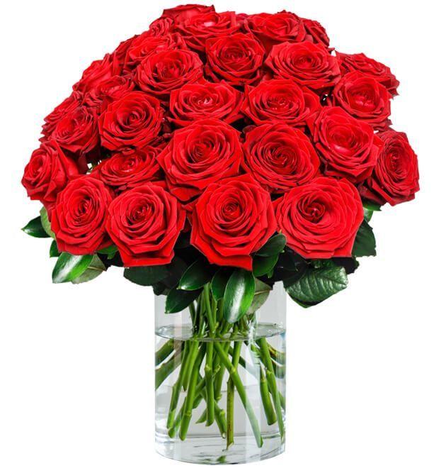 30 rote Premium Rosen Red Naomi mit 80 Blütenblätter pro Stiel für 24,98€ inkl. Zustellung