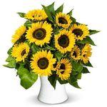 20 Sonnenblumen mit ca. 60cm Stiellänge für 22,98€