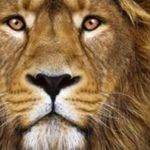 Höhle der Löwen: heute EasyPan Pfanne mit Schwenkhilfe viele Größen ab 9,99€